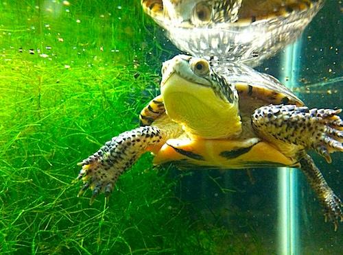 turtle-IMG_0776.jpg