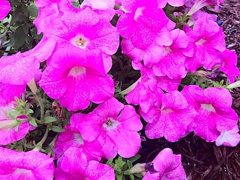 flowers-IMG_0877.JPG