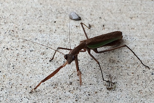 insect-IMG_8634.JPG