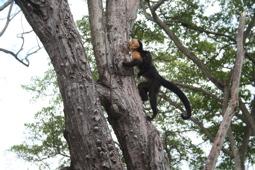Costa Rica Monkey 2007